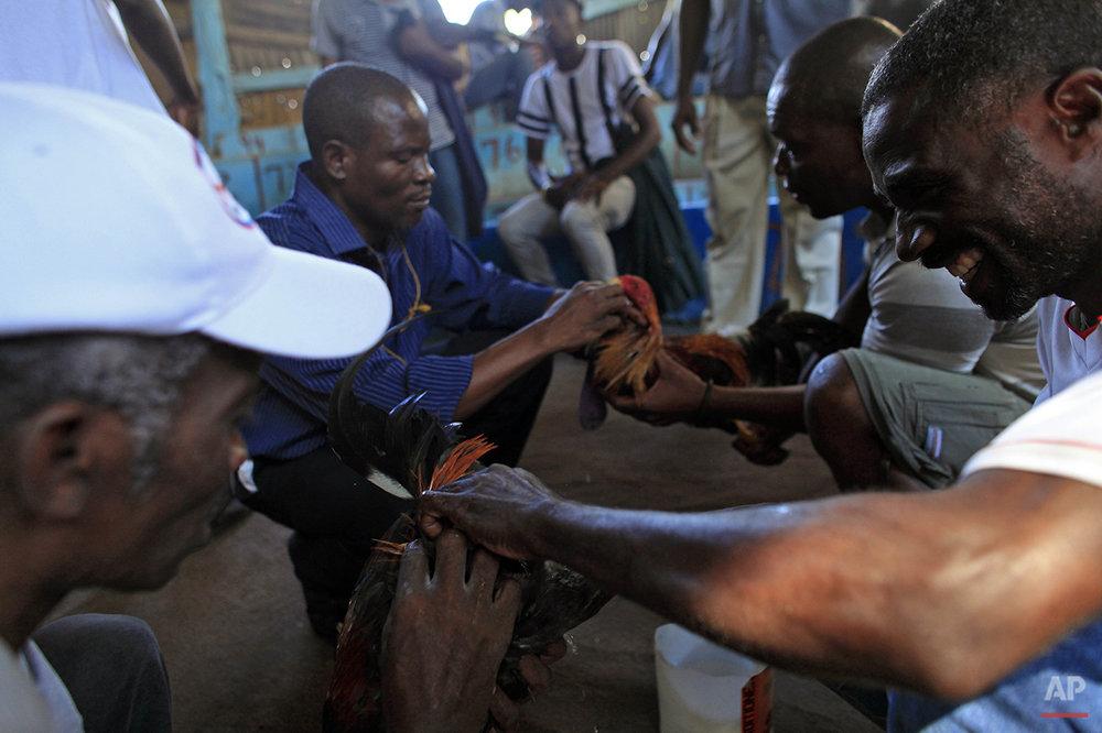 Haiti Cockfighting Photo Gallery