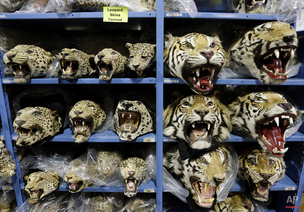 APTOPIX Endangered Species Warehouse Photo Gallery