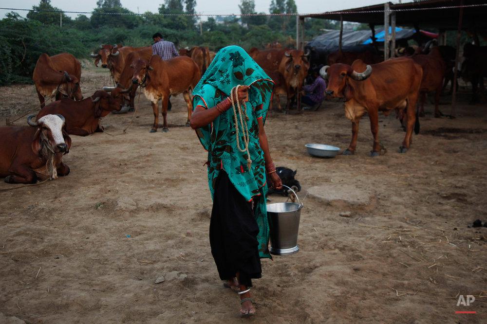 India Milk Everywhere
