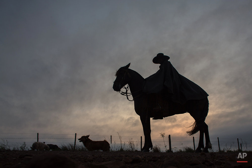 "In this Sept. 18, 2015, a ""gaucho"" accompanied by his dog, rides his horse to go to his work at the rural area of Santa Izabel ranch, Alegrete municipality, Rio Grande do Sul, Brazil. Wearing traditional broad-brimmed hats and red neckerchiefs, their trousers tucked into soft, leather boots, the South American gauchos trot on handsome horses down the street of the small southern community. (AP Photo/Eraldo Peres)"