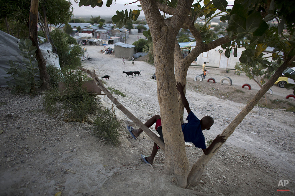 In this June 26, 2015 photo, a boy sits in a tree inside a tent camp set up for people displaced by the 2010 earthquake but that has turned into a longterm settlement in Port-au-Prince, Haiti.  According to the International Organization for Migration, nearly 65,000 people were still living in 66 camps as of March 31, 2015. (AP Photo/Rebecca Blackwell)