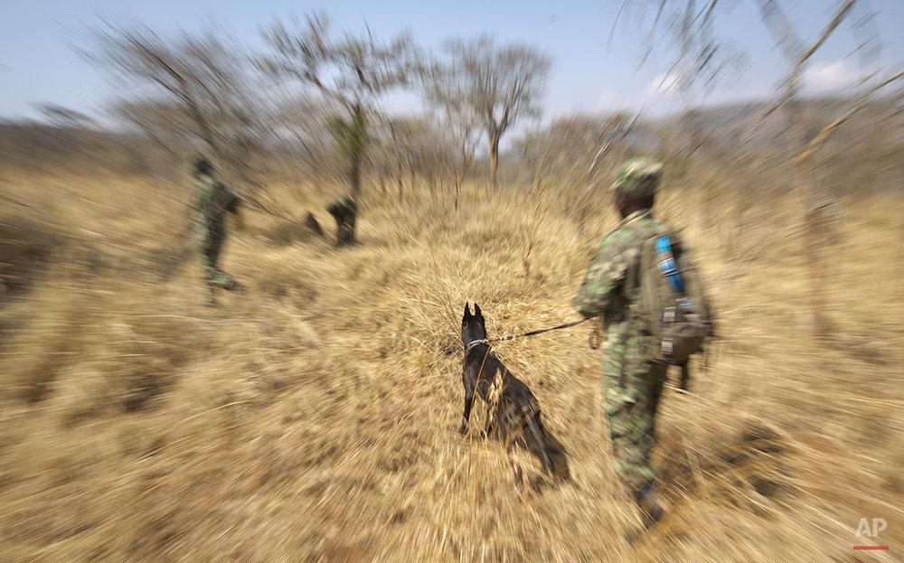 Rwanda Tracker Dogs