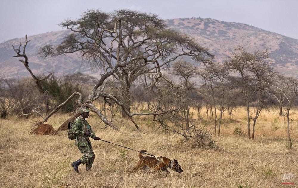APTOPIX Rwanda Tracker Dogs