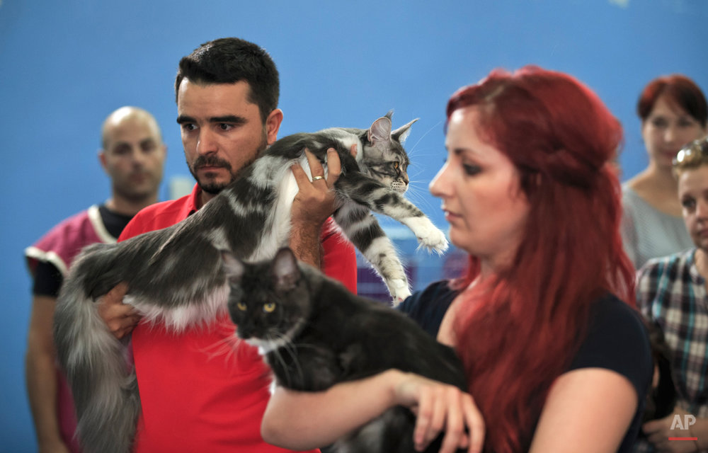 Romania International Cat Show