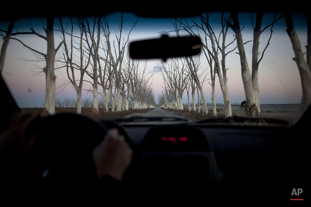 In this May 6, 2013 photo, trees line a road seen through a car in Epecuen, a village which once was submerged in water in Argentina.  A strange ghost town that spent a quarter-century under water is coming up for air again in the Argentine farmlands southwest of Buenos Aires. (AP Photo/Natacha Pisarenko)