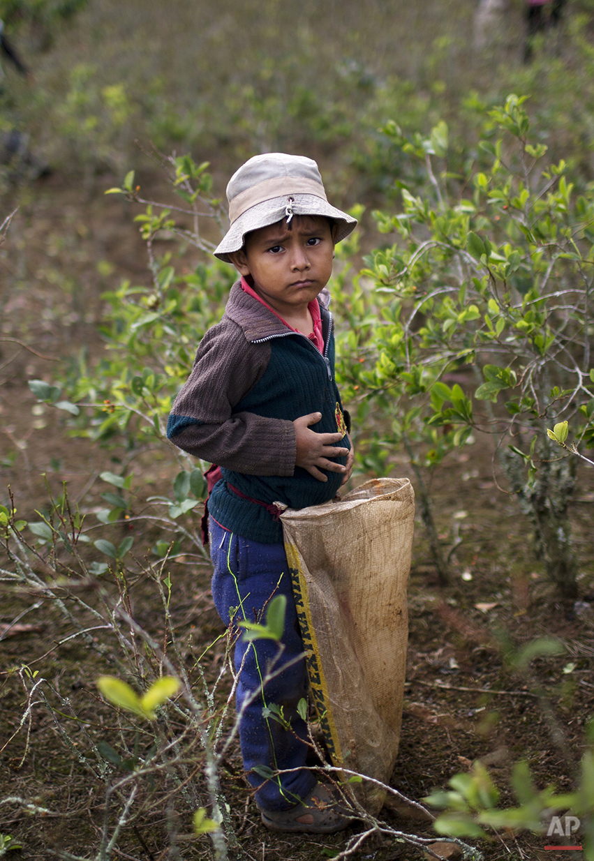 Peru Coca Farmers Photo Gallery
