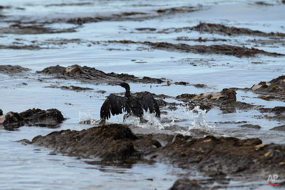 APTOPIX California Oil Spill