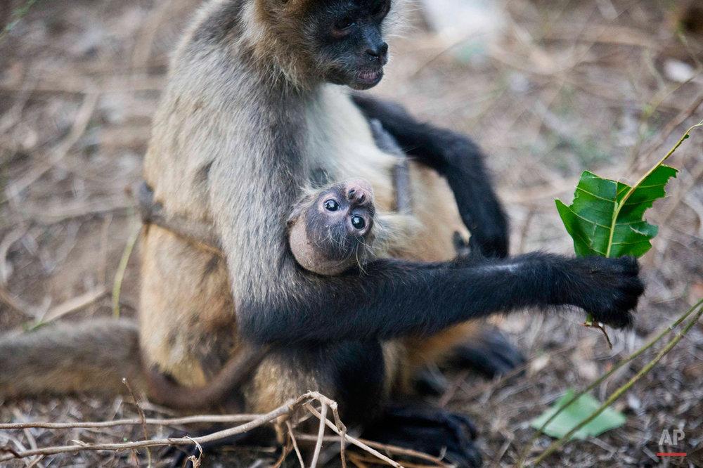 APTOPIX Nicaragua Zoo