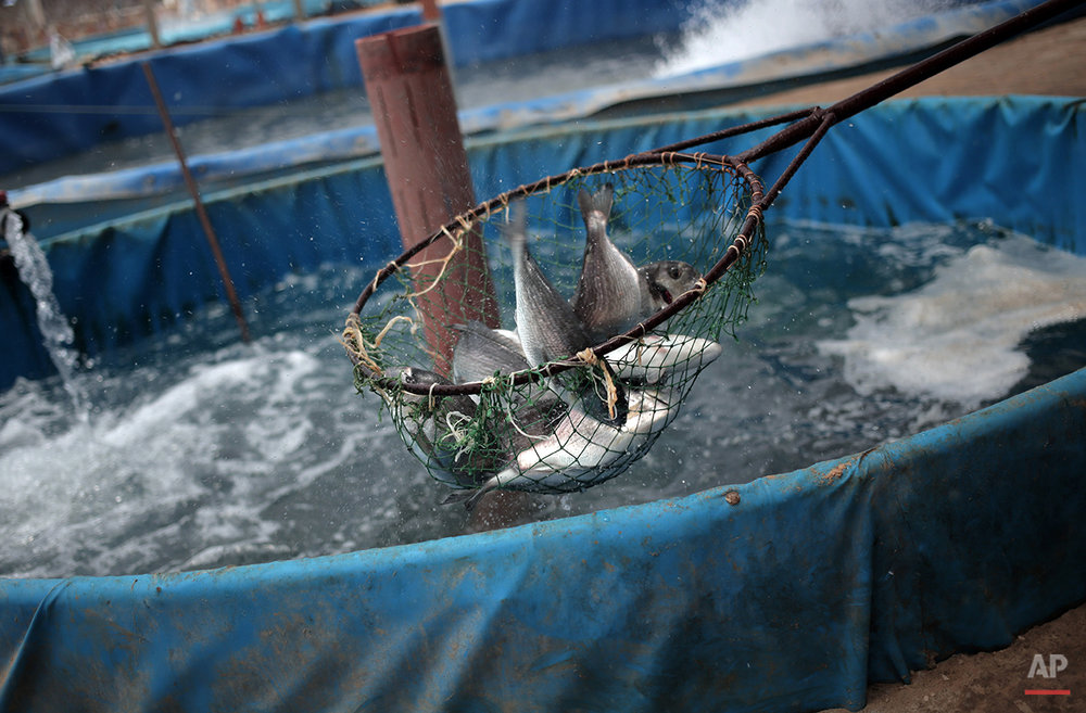 Mideast Gaza Fish Farms