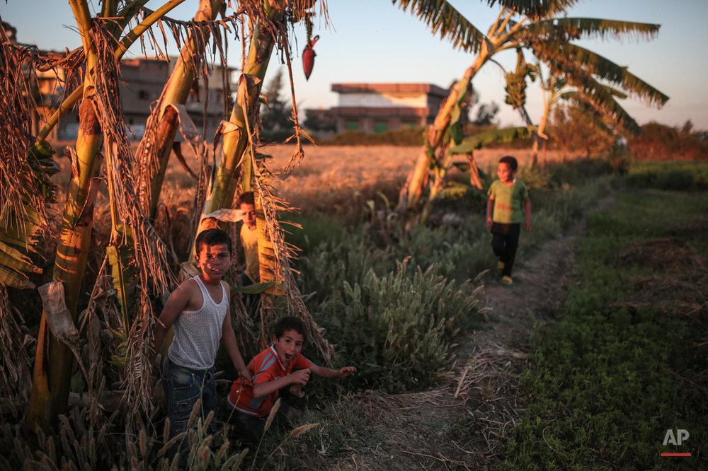 In this Wednesday, May 6, 2015 photo, children play on their family's farm, in a village in the Nile Delta town of Behira, 300 kilometers (186 miles) north of Cairo, Egypt. Children still play among banana trees and fields as sheep graze nearby and palm trees rustle in the wind _ but such pastoral images are being pushed out by an unstoppable urban sprawl encroaching on the landscape. (AP Photo/Mosa'ab Elshamy)
