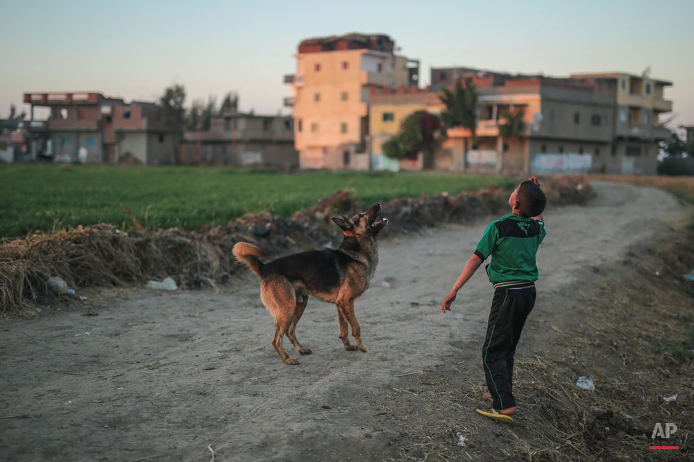 In this Wednesday, May 6, 2015 photo, a boy plays with his dog in a village in the Nile Delta town of Behira, 300 kilometers (186 miles) north of Cairo, Egypt. Urban growth has become the chief threat to farmland as Egyptian farmers haphazardly _ and illegally _ build new houses to make room for the next generation. (AP Photo/Mosa'ab Elshamy)