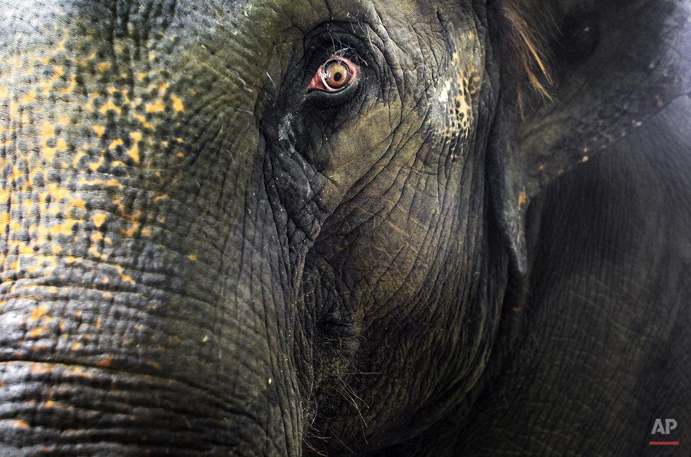 Singapore Baby Elephant