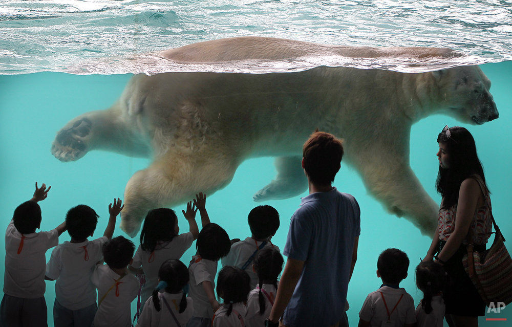 APTOPIX Singapore Polar Bear