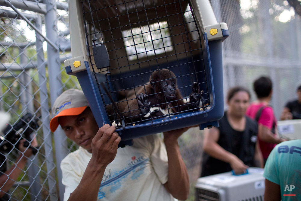 Peru Rescued Animals Photo Gallery