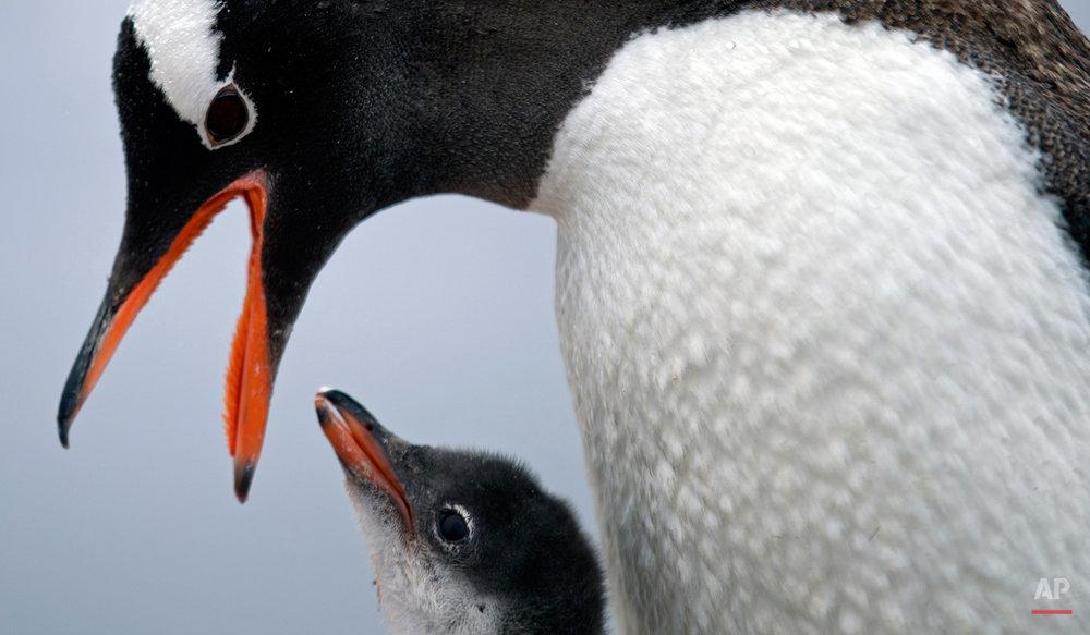 APTOPIX Antarctica Mysteries Photo Essay