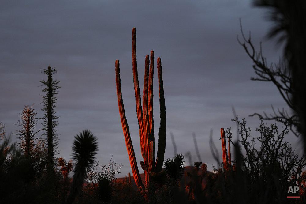 APTOPIX Mexico Baja Tourism Photo Gallery