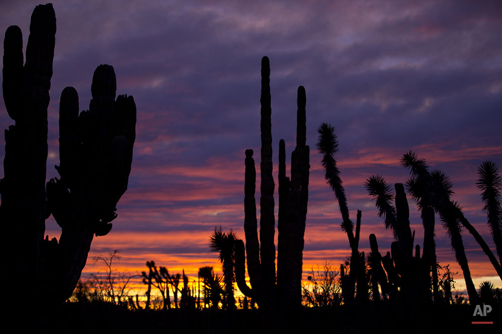 Mexico Baja Tourism Photo Gallery