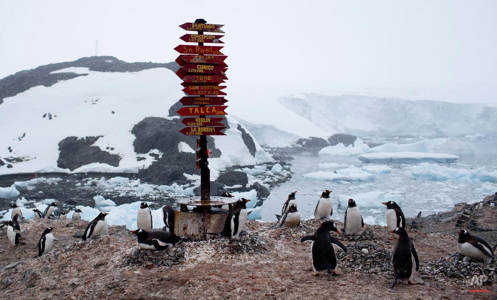 APTOPIX Antarctica Tourism