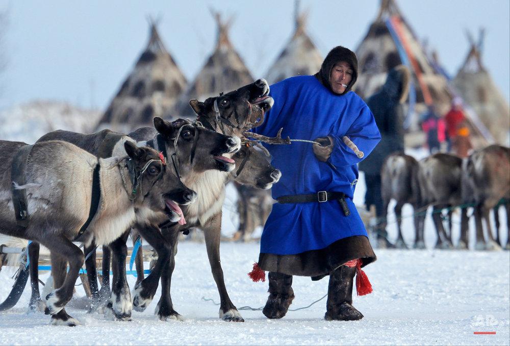Russia Reindeer Herderís Day