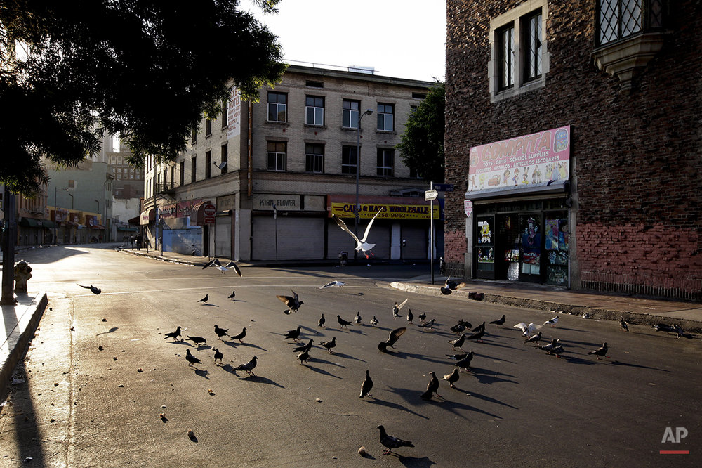 Birds eat bread crumbs on an empty street of the Skid Row area of Los Angeles on Thursday, July 18, 2013. (AP Photo/Jae C. Hong)