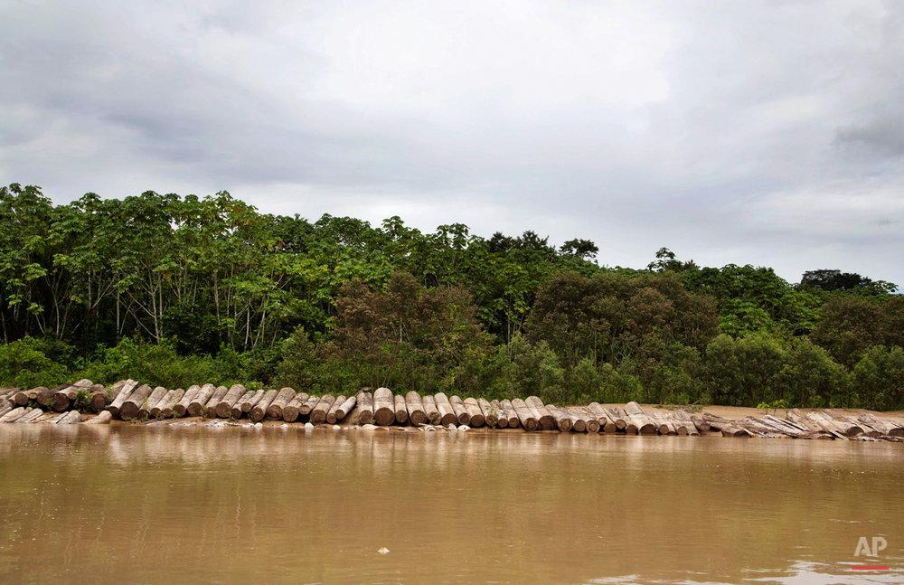 Peru Illegal Logging Photo Gallery