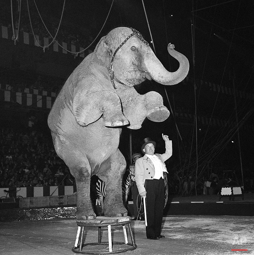 Ringling Bros Circus Elephants Photo Gallery