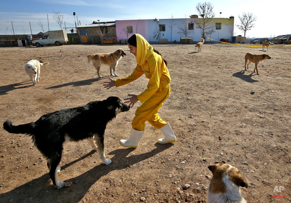 Mideast Iran Dog Shelter