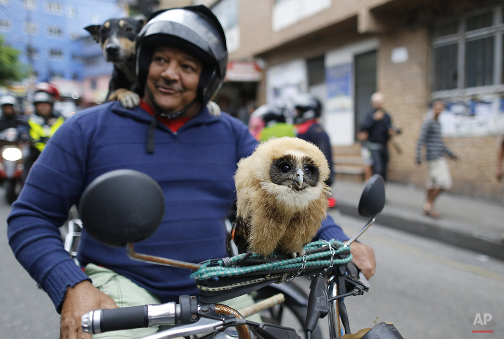 In this Aug. 30, 2014 photo, a man stops to pose for a portrait on his motorcycle, carrying his pet owl and dog, as he arrives to the area where Brazilian Socialist Party presidential candidate, Marina Silva, will campaign in the Rocinha slum in Rio de Janeiro Brazil. Brazil will hold its presidential election on Oct. 5. (AP Photo/Leo Correa)