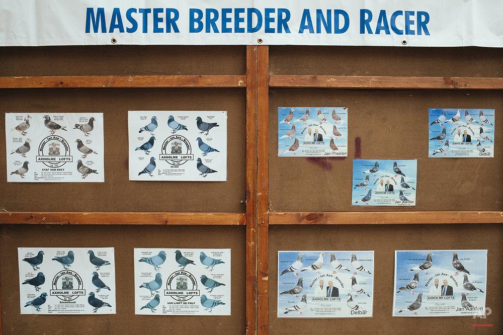 Britain Pigeon Fanciers