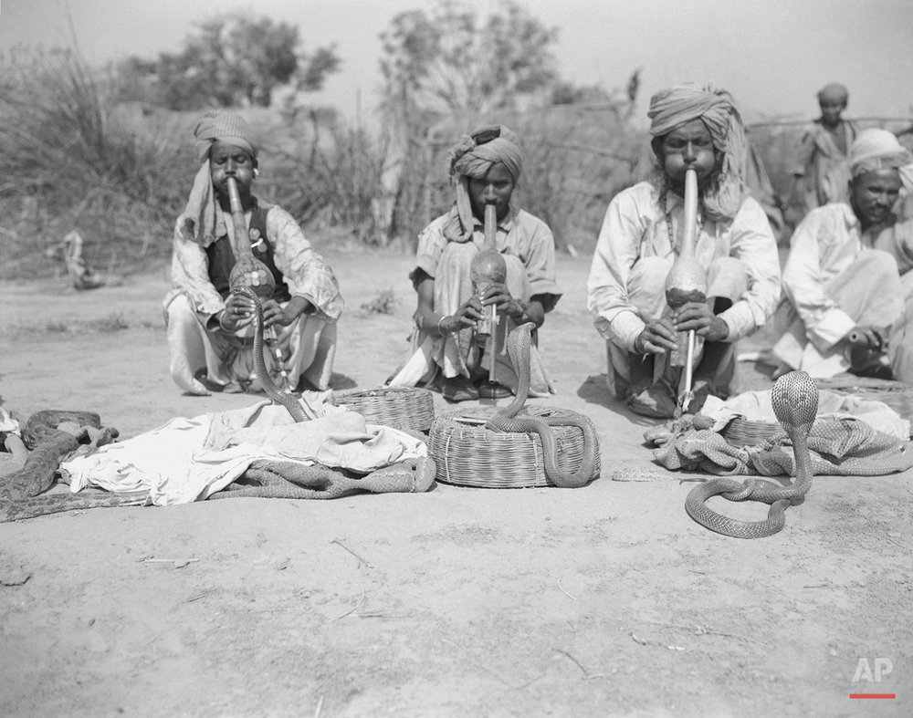 About 15 miles from Delhi at the village of Molarbund is a snake charmers' colony, shown March 25, 1949. The men travel all over India to give performances of their art but they always return to this, their home village. They make their musical instrument, called a ìbeenî, out of a locally grown type of gourd. Besides the familiar cobra they also exhibit pythons, Russell's vipers, kraits and slow worms. After giving snake charming exhibitions, for additional income they also sell an antidote for snakebite. (AP Photo)