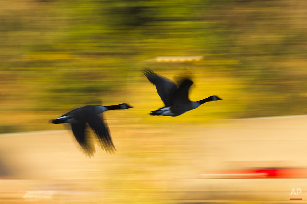 Geese fly past autumn foliage and above the Schuylkill River, Monday, Oct. 27, 2014, in Philadelphia. (AP Photo/Matt Rourke)