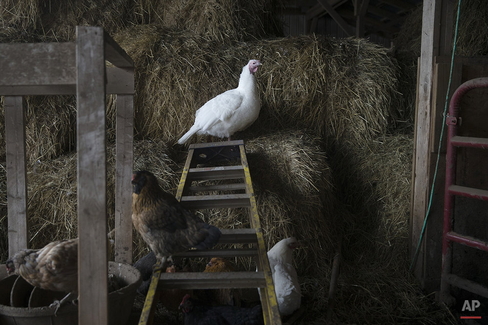 Turkey Farmers Photo Gallery