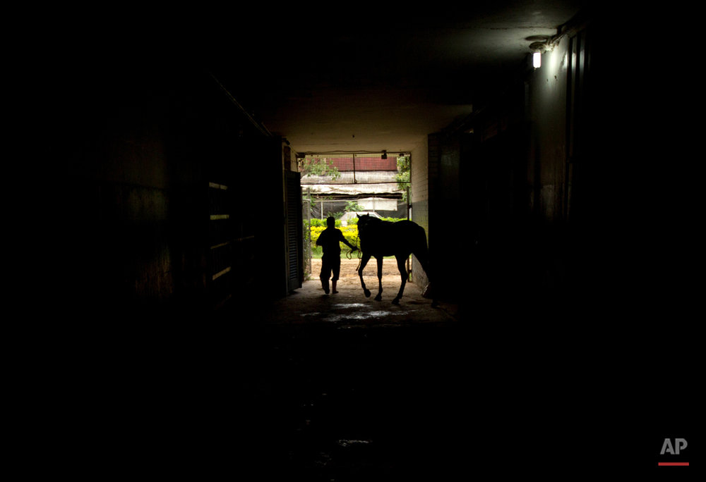 Venezuela Horse Mafia Photo Essay