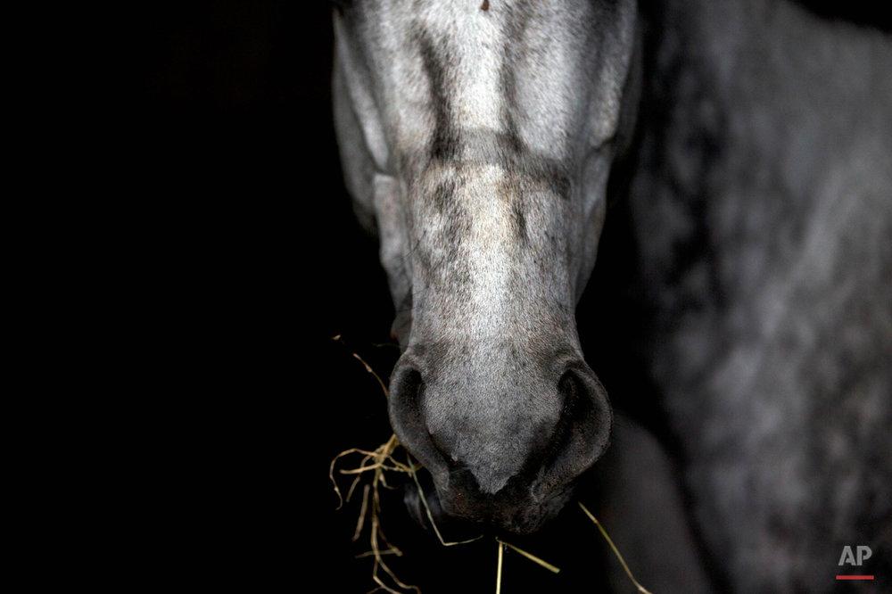 APTOPIX Venezuela Horse Mafia Photo Essay