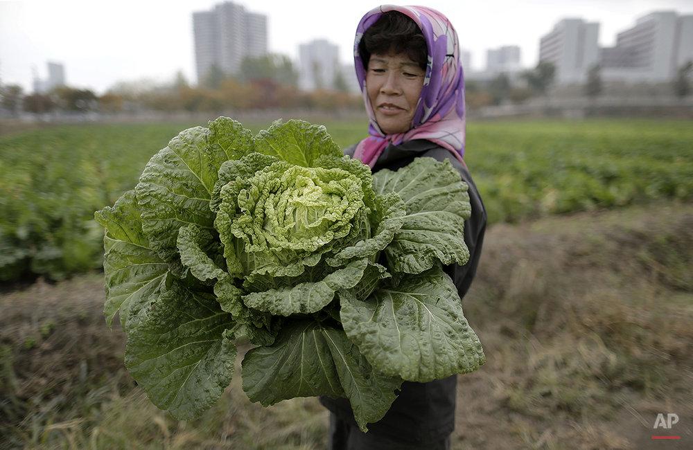 North Korea Farmers