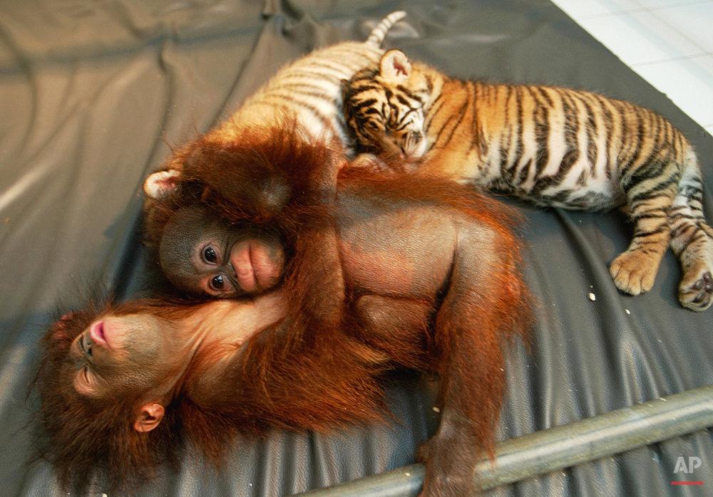 Animals Unusual Combos
