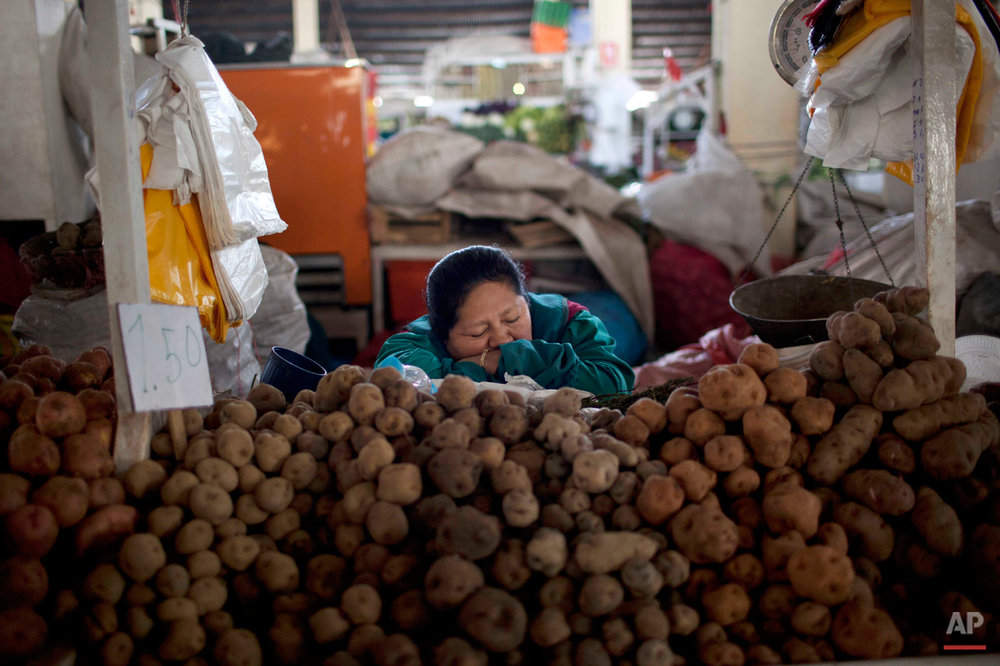 A potato vendor takes a catnap as she waits for customers at the San Pedro market in downtown Cuzco, Peru, Friday, Sept. 13, 2013. The potato is a source of Peruvian national pride, with some 3,000 varieties reportedly cultivated in the country. (AP Photo/Rodrigo Abd)