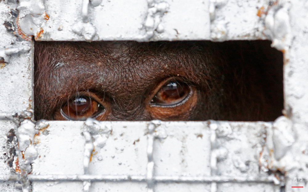 Pictures Of The Week Photo Gallery Thailand Wildlife Trafficking