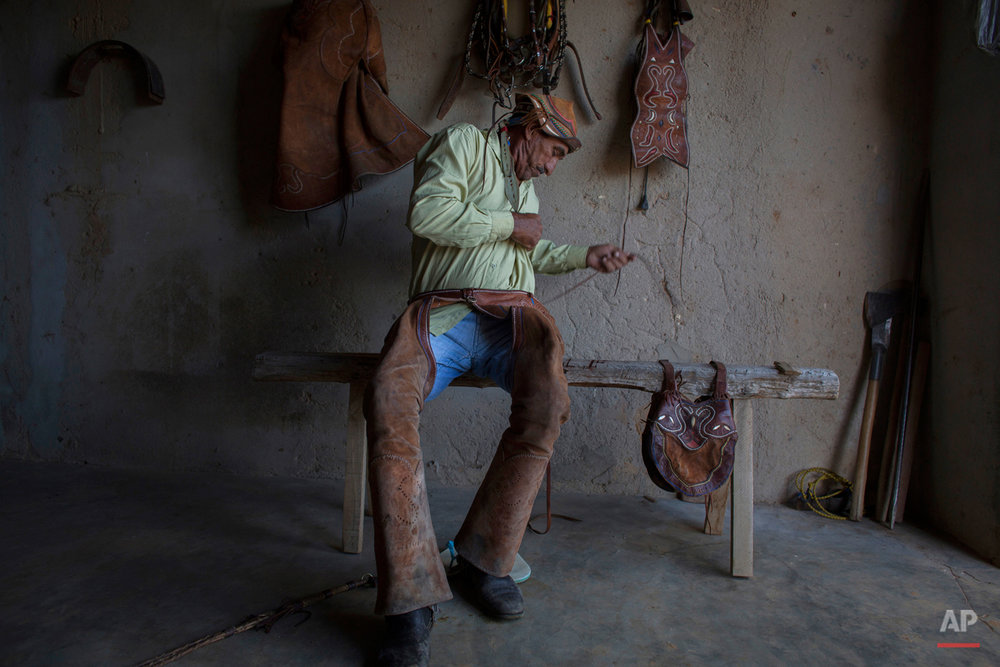 """In this July 24, 2015 photo, Brazilian cowboy Joao de Cazuza laces up his chaps to compete in the annual Catch the Bull event in Serrita, in Brazil's Pernambuco state. Cazuza, 56, is clad head-to-toe in traditional garb called ìgibao.î The protective leather clothing consists of elaborately stitched chaps, jacket, hat and hand coverings decorated with bits of color for the annual festival known as """"Pega de Boi."""" (AP Photo/Eraldo Peres)"""