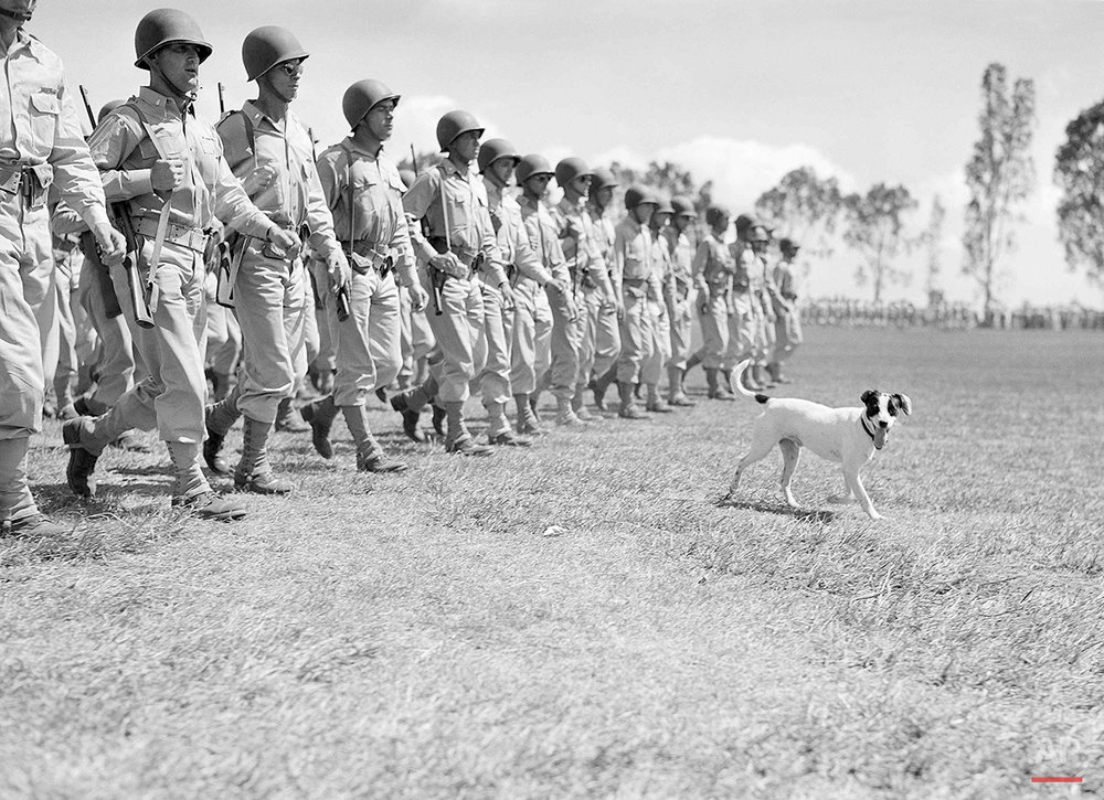 "This dog who fell in line during a review of the oldest U.S. Army division with a continuous history, appears to be having a good time stepping along briskly, somewhere in the Central Pacific on Sept. 29, 1943. The review celebrated the division's ""Organization Day."" (AP Photo/Pool)"
