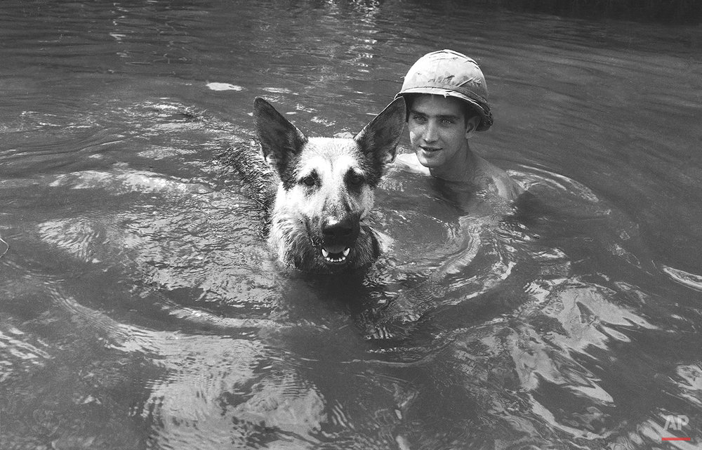 A dog handler attached to the U.S. 173rd airborne brigade and his dog take a cooling swim in a stream near the Unit's home base at Bien Hoa, near Saigon  Oct. 1, 1967. They had just returned from a patrol and both leaped into the water. (AP Photo)