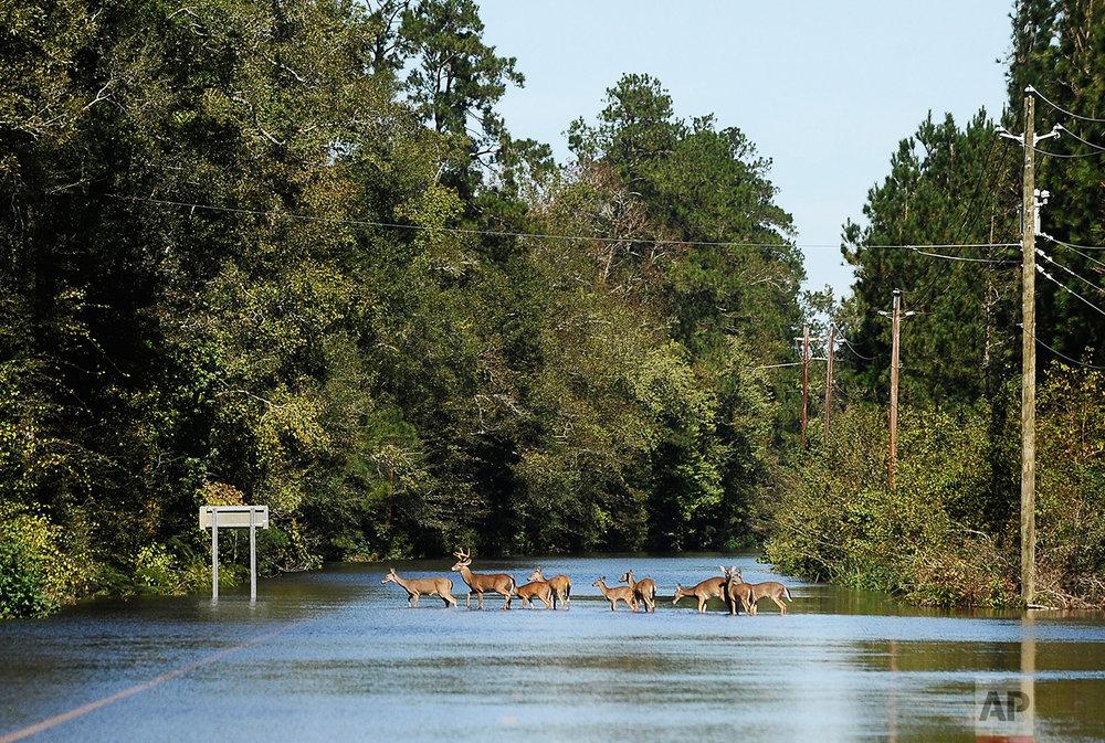 Hurricane Matthew South Carolina