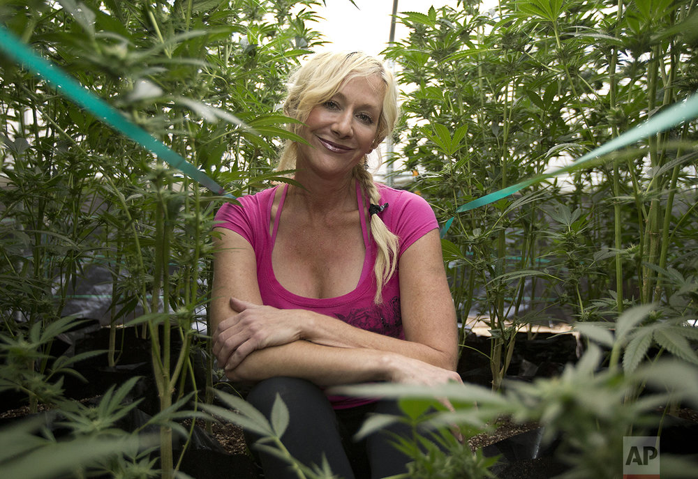 In this Wednesday, Oct. 12, 2016 photo, Christine Miller sits among some of the 250 marijuana plants on her farm near Benbow, Calif. Miller is concerned about the increased cost to operate her 250-plant farm if California voters approve Proposition 64, the Nov. 8 ballot initiative that would legalize the recreational use of marijuana. (AP Photo/Rich Pedroncelli)