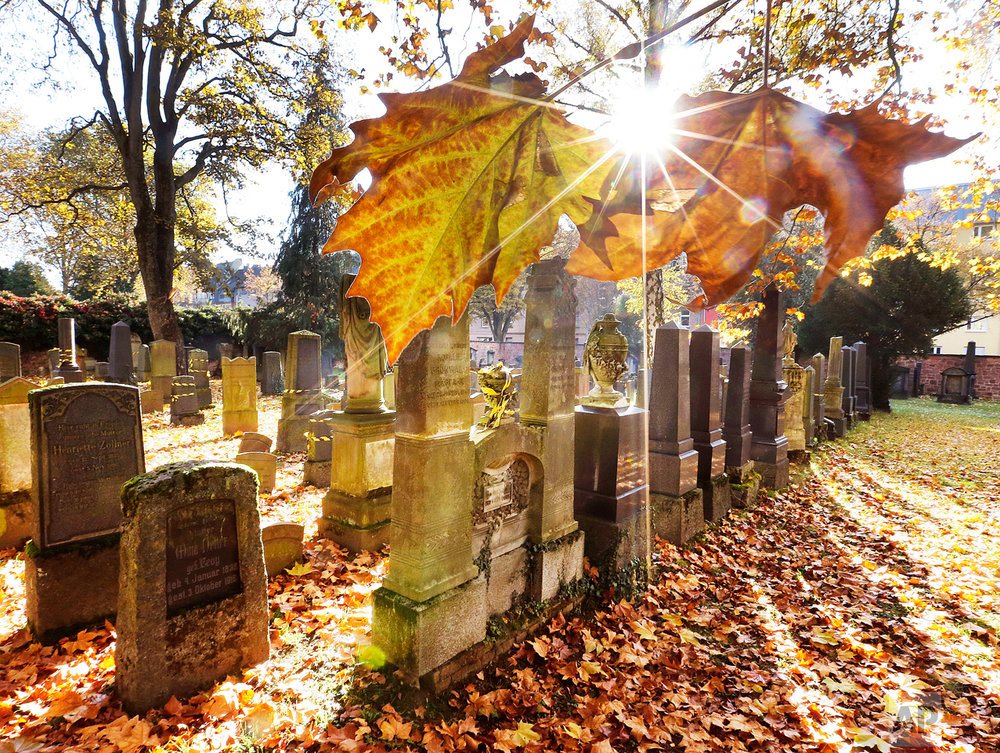 Colored leaves hang down from a tree on the Old Jewish Cemetery in Frankfurt, Germany, Wednesday, Nov. 2, 2016. The Jewish cemetery is the second oldest in Germany with a grave dating from 1272. (AP Photo/Michael Probst)