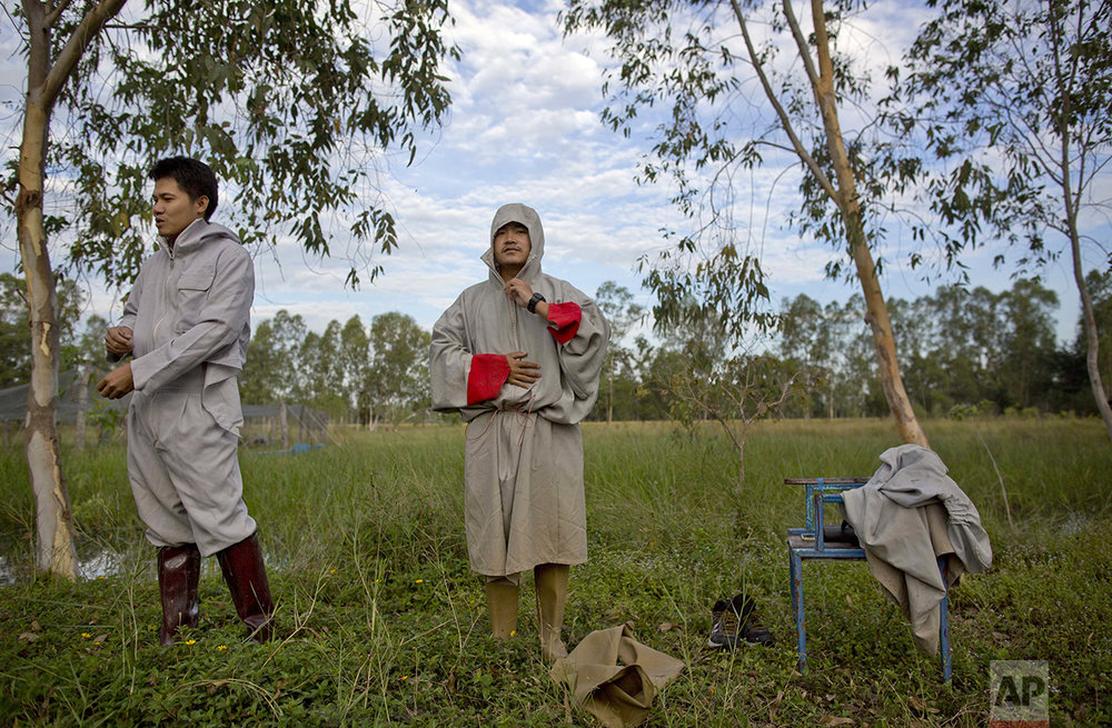 In this Friday, Nov 4, 2016, photo, animal scientists Tanat Uttaraviset, left, and Natawut Wanna, wear crane suits as they prepare to release a sarus crane to the wild at a wetland acclimating center in Buriram, Thailand. (AP Photo/Gemunu Amarasinghe)