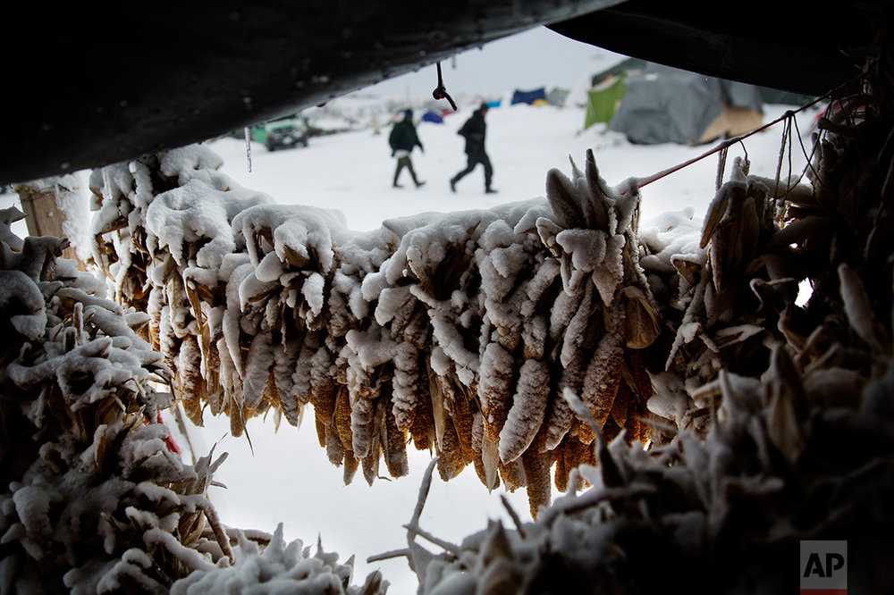 """In this Tuesday, Nov. 29, 2016 photo, corn covered in snow hangs outside a tent at the Oceti Sakowin camp where people have gathered to protest the Dakota Access oil pipeline in Cannon Ball, N.D. North Dakota has often conjured images of a wind-swept, treeless wasteland. The perception was so great that it led to a short-lived proposal to change the state's name by dropping """"North"""" and leaving just """"Dakota,"""" to dispel the image of inhospitable winter weather. (AP Photo/David Goldman)"""
