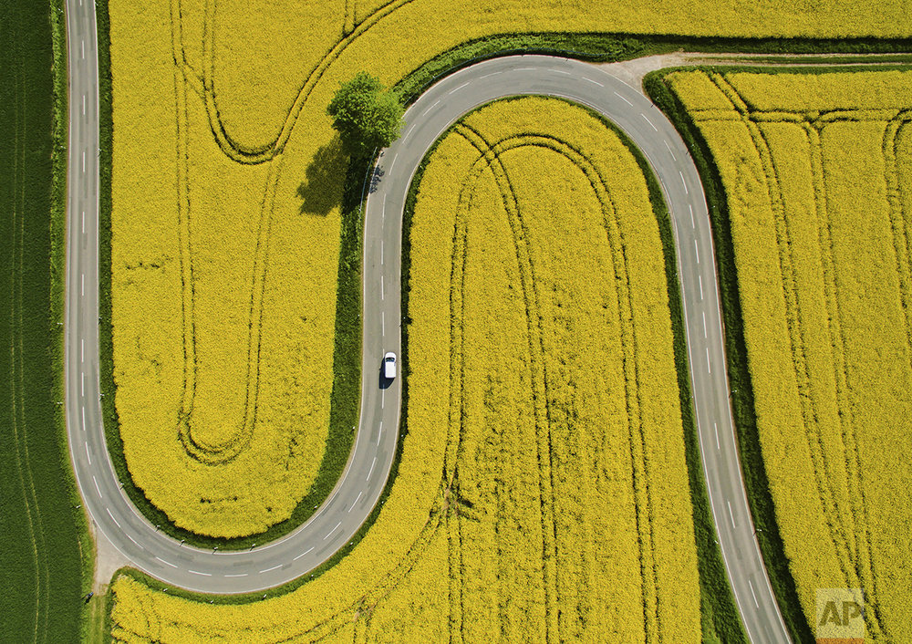 A car makes its way on a winding road through flowering canola fields on the L401 highway near Nienstedt, Germany, on May 12, 2016. (Julian Stratenschulte/dpa via AP)