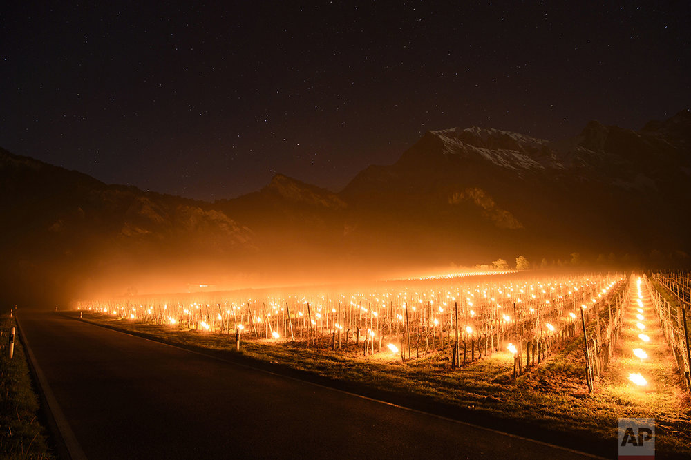 Anti-frost candles burn in a vineyard in Flaesch, in the Swiss canton of Grisons, on April 28, 2016. Due to unusual low temperatures wine growers try to protect their grape shoots with anti-frost candles. (Gian Ehrenzeller/Keystone via AP)