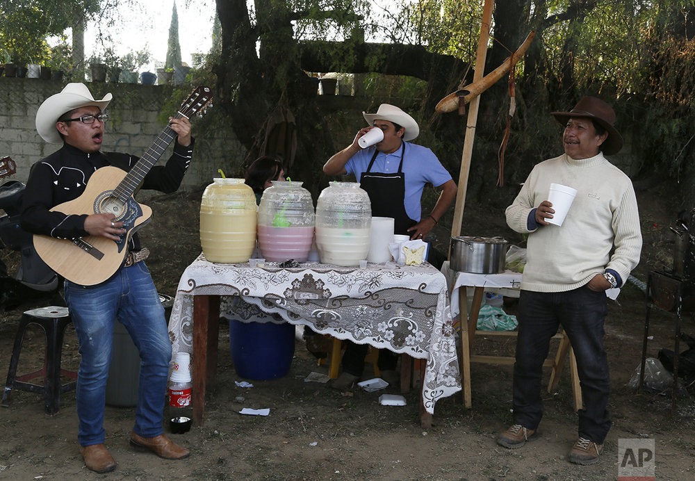 In this Nov. 20, 2016 photo, a guitarist sings during a pulque caravan in Santiago Cuautlalpan, Mexico. Pulque long had a reputation as the drink of poor farmers, and many assumed it was produced under unsanitary conditions, something its fans say is not true. The nutrient-rich drink is making a comeback among a new generation of Mexicans. (AP Photo/Marco Ugarte)