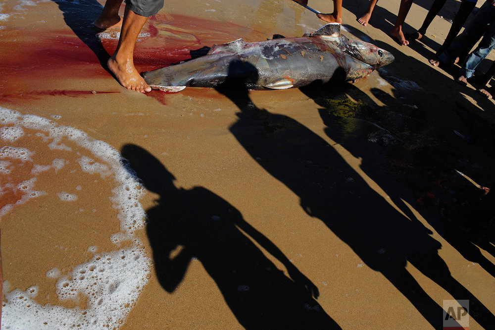 In this Nov. 14, 2016 photo, people look at a shark caught by local fishermen in Punta de Araya, Sucre state, Venezuela. People here once made a bare living in the fishing and sugar industries, but as the state sinks into chaos, people are out of work and turning to crime. (AP Photo/Rodrigo Abd)
